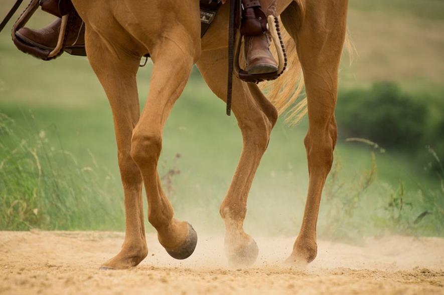 regeneracja kości u koni