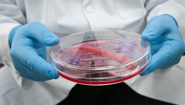 zdjęcie Wake Forest Institute of Regenerative Medicine z badań o stworzeniu modelu ludzkiego ciała na blogu SYGNIS